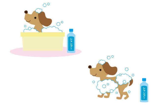 シャンプー 犬